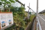 「早く畑に帰りたい」と訴えかけてる!兄弟かぼちゃが盗まれたそうな!~第二京阪国道沿いの畑にこんな張り紙がありました~