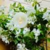 「私を見て欲しいという焦がれを満たしたら...」池澤良子のAFPオンライン アート・オブ・フェミニン・プレゼンス連続クラス 7月6日スタート