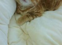 宮脇咲良、ネコを飼い始める!
