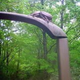 『かぶと虫の森』の画像
