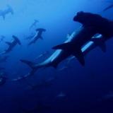 【閲覧注意】トラウマになるほど海が怖くなる画像をください!!