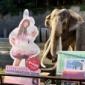 """""""あーりん×金沢動物園"""" コラボスタート!「ゾウをあーりんが..."""