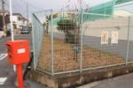 交野2中のところに珍しく貴重な木がある!~徳島城に由来する国登録有形文化財~