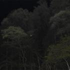『採餌場所での飛翔』の画像