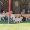 たくさんのイヌが仲良く遊んでいた。わ~い、わ~い♪ → ちょっと離れたところでは…
