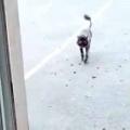 ネコがこっちに歩いてきた。かわいいブーツを履いている♪ → サマーカットした猫はこんな感じ…