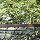 『小屋つくり・ジョウビタキ』の画像