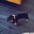 子イヌを押すと床を滑る。もう1回だワン! → 子犬、とまりません…