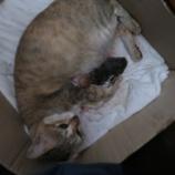 『宿舎の猫ケオチャンのお産』の画像