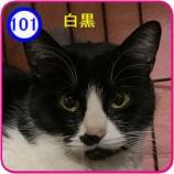 『里親募集【つくの】101』の画像