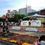 『こうち春花まつり🌼』の画像