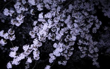 『花に嵐、心に原発事故。』の画像