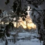 『素敵な雪の日』の画像