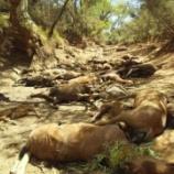『猛暑の犠牲:オーストラリアの野生馬たちの死』の画像