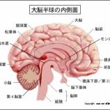『人間の脳をパソコンで例えたらどのぐらい?』の画像