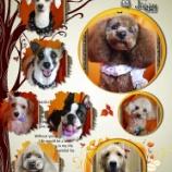 『2013-10-23のわんちゃん達です。』の画像