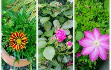 『初夏のお庭』の画像