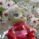 桜とミクさん!(その3)