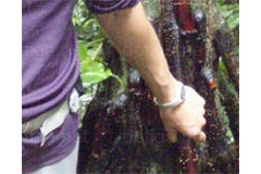 【画像】この木何の木、握りたくなる木 立派すぎます(´;ω;`)