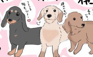 毛質で性格を見分けられる犬種
