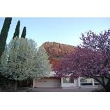 『桜咲く』の画像