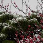 『朝の雪』の画像