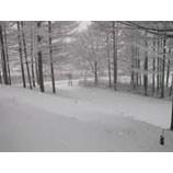 『雫石は朝から雪です!』の画像