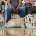 1989年4月25日は、「国際盲導犬の日」