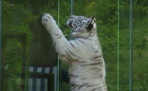 鳴ぐごはいねが? Zoo&Aquarium