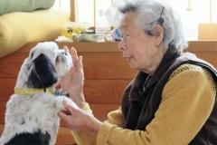 愛犬、83歳女性救う…散歩コースと逆の高台へ