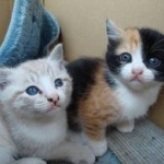 猫の里親募集サイトの条件厳しすぎワロタwwww