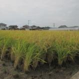 『【北九州】稲刈り』の画像
