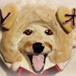 『かわいすぎる!似顔絵ケーキになったレオちゃん♪』の画像