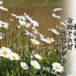 『早川さんに贈る』の画像