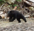 滋賀に無断でクマ放獣して抗議された三重県 仕方ないので今回は奈良・和歌山県境寄りにクマ放獣