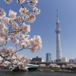 『「春のうららの隅田川~」、花見と地元ならではのスイーツを楽しもう!』の画像