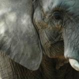 『ボツワナでゾウの殺戮を公認』の画像