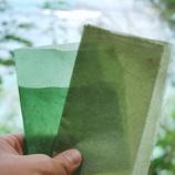 『世界の環境を救う海藻』の画像