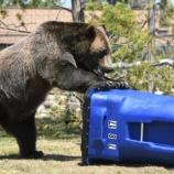 『【動画】クマが歩いてたから蹴ってみた』の画像
