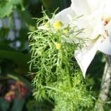 『次々と花』の画像