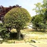 『「岡城館歴史公園」がついに完成したらしい。』の画像