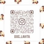 Dog La Vita★Blog