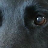 『「掬水月在手」中国の犬肉祭から犬たちを救う女性』の画像