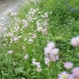 『花を撮れば・春女苑』の画像