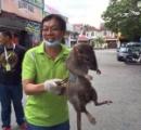 【画像】フィリピンでデカ過ぎるネズミが発見されるwwwwwwwwwwwwwwwwwwwwwwwwwwww