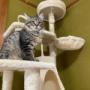 マロちゃんに猫タワーをプレゼント