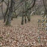 『古木の椈』の画像