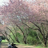 『今日の1号館(寒桜)』の画像