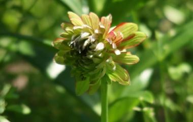『無農薬栽培の現実&バラ「サマンサ」を植え替えする』の画像