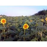 『夏から秋への気配』の画像